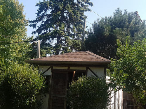 Shed roof complete - Mississauga